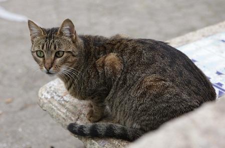 アルジェの猫.JPG