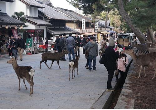 東大寺前の鹿.jpg