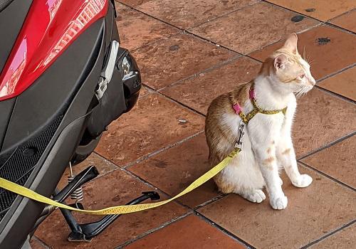 20191201主人を待つ猫.jpg