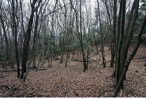 20161220冬の大文字の林.JPG
