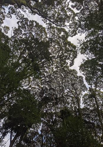 20211013シイの樹林.jpg