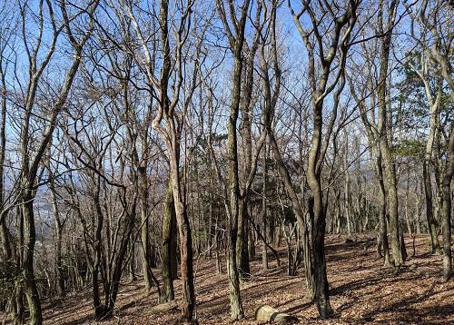 20210213明ヶ田尾山の林.jpg