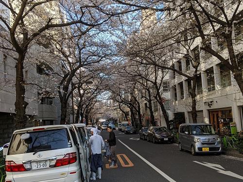20200324東京の桜.jpg