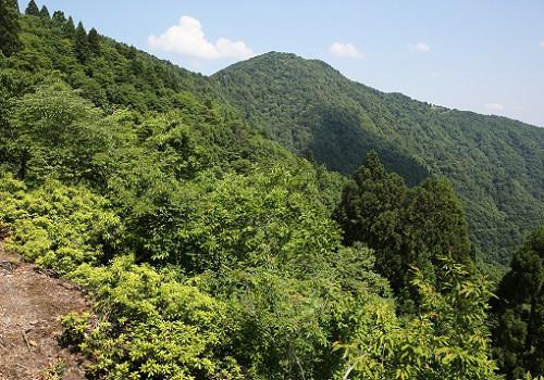 20180605百里ヶ岳.JPG