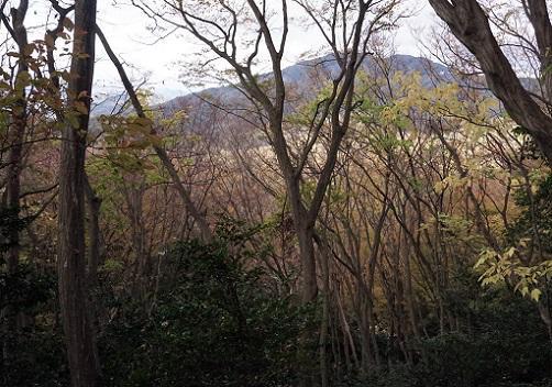 20181122大文字山紅葉.JPG