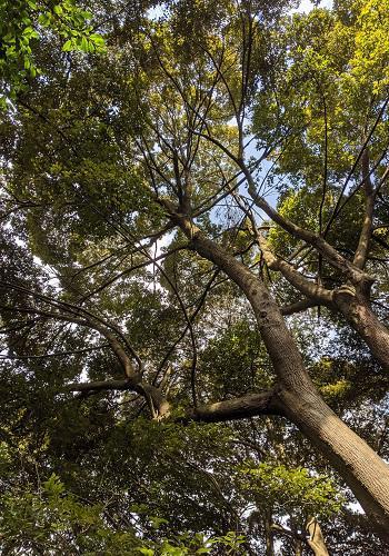20200319与喜照葉樹林.jpg